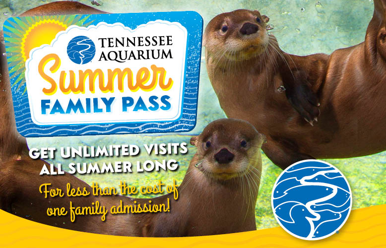 tennessee aquarium printable coupons food city 25068
