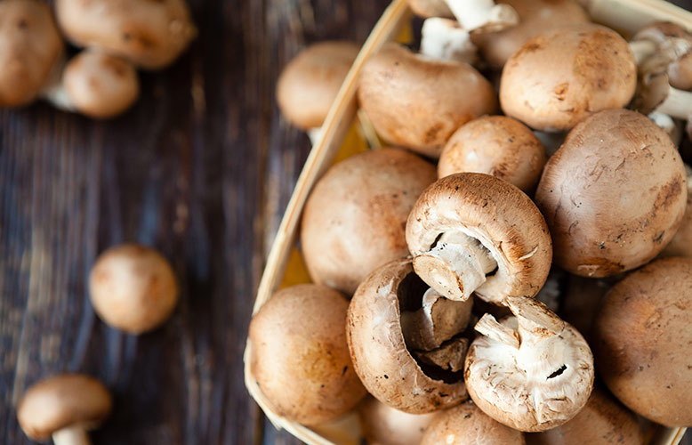 Wellness Club — Solving the Vitamin D Mystery with Mushrooms