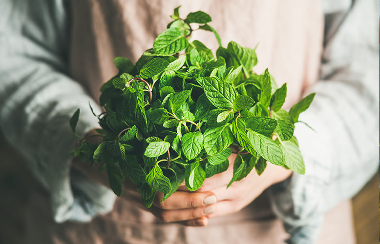 Wellness Club — 5 Herbs Every Cook Should Use