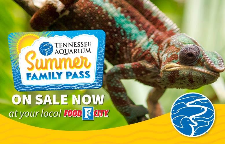 Tennessee Aquarium Family Fun Pass Sale