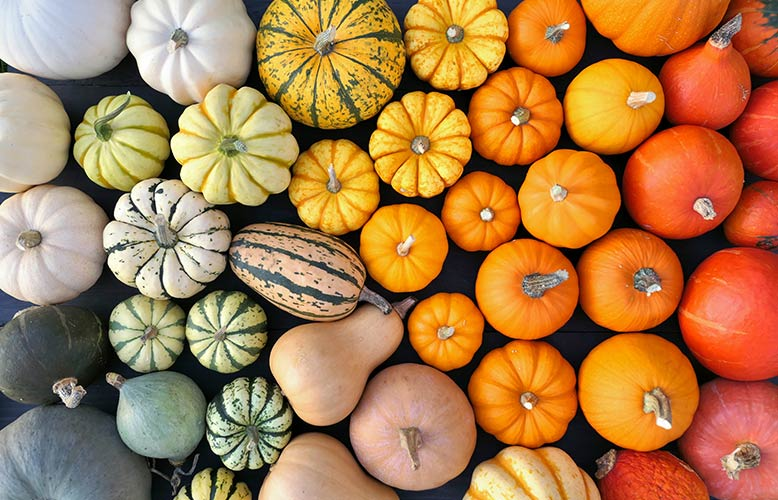 Wellness Club — Fall in Love with Winter Squash