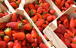 Scott Farms are locally known for their fresh strawberries. You can find them and so many more locally grown items in the produce section of your local Food City grocery.