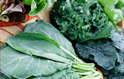 Snake Creek Farms specializes in Collards, Kale, Turnip Greens, and Mustard Greens. Pick some up when in season at your local Food City grocery store.