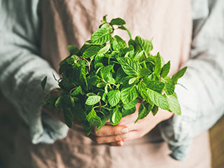 Find all the fresh herbs you can ever want at your local Food City.
