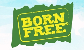 Born Free Eggs